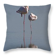 Greater Flamingo Phoenicopterus Ruber Throw Pillow
