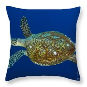Hawksbill Sea Turtle, Kimbe Bay, Papua Throw Pillow