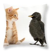 Jackdaw And Kitten Throw Pillow