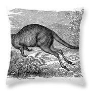 Kangaroo Throw Pillow
