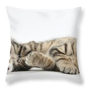 Kitten Companions Throw Pillow