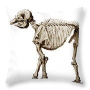 Mastodon Skeleton Throw Pillow by Science Source