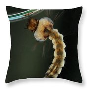 Mosquito Larva Throw Pillow