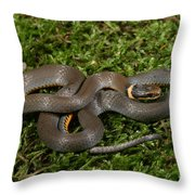 Northern Ringneck Snake Throw Pillow