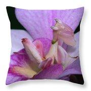 Orchid Mantis Hymenopus Coronatus Throw Pillow