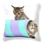 Playful Kittens Throw Pillow
