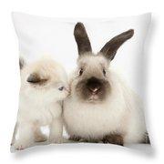 Ragdoll-cross Kitten And Young Throw Pillow