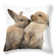 Sandy Rabbits Sharing Grass Throw Pillow