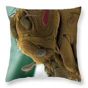 Sem Of A Mutant Fruit Fly Throw Pillow