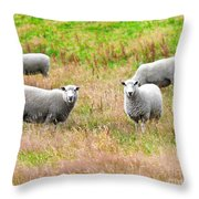 Sheeps Throw Pillow