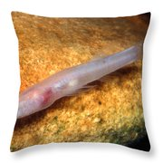 Southern Cave Fish Throw Pillow