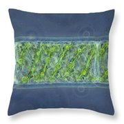 Spirogyra Sp. Algae Lm Throw Pillow