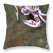 Spotted Porcelain Crab Feeding Throw Pillow