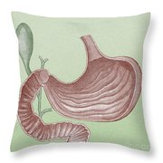 Stomach And Bile Duct Throw Pillow