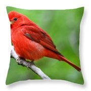 Summer Tanager Throw Pillow