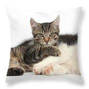 Tabby Kitten & Border Collie Throw Pillow