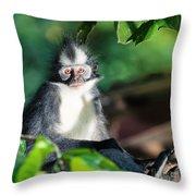 Thomas's Leaf Monkey Throw Pillow