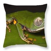 Tiger Stripe Monkey Frog Throw Pillow