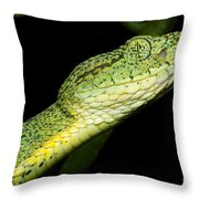 Two Striped Forest Pit Viper Throw Pillow