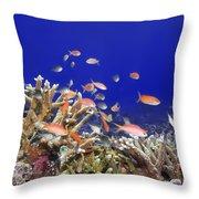 Underwater World Throw Pillow