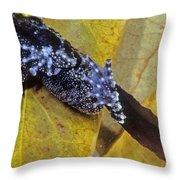 Vietnamese Moss Frog Throw Pillow