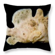 Warty Frogfish Throw Pillow