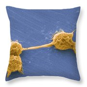 Water Biofilm With H. Vermiformis Cysts Throw Pillow by Science Source