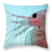 Water Flea Daphnia Magna Throw Pillow