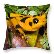 Harlequin Toad Throw Pillow