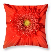 3010 Throw Pillow