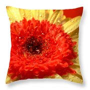 3164-001 Throw Pillow