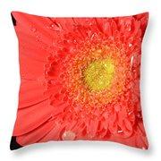 3264 Throw Pillow
