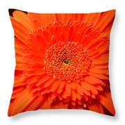 3289c Throw Pillow