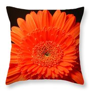 3291 Throw Pillow
