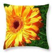 3411-001 Throw Pillow