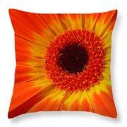 3436-002 Throw Pillow