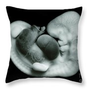 35 Day Old Human Embryo Throw Pillow
