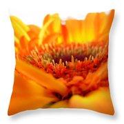 3559 Throw Pillow