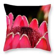 Protea Blossom Throw Pillow