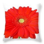 3631 Throw Pillow