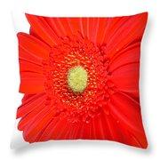 3632 Throw Pillow