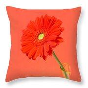 3990-001 Throw Pillow