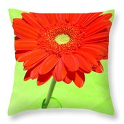 3997-001 Throw Pillow