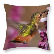 Allens Hummingbird Throw Pillow