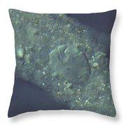 Amoeba Proteus Lm Throw Pillow