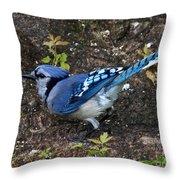 Blue-jay Throw Pillow