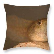 Bullfrog Tadpole Throw Pillow by Ted Kinsman