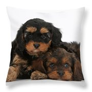Cavapoo Pups Throw Pillow