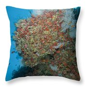 Colourful Reef Scene, Ari And Male Throw Pillow