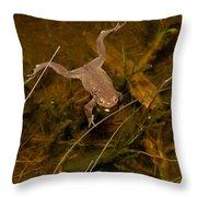 Common Frog Throw Pillow